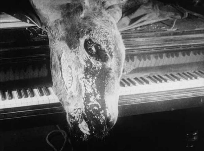 The blood head of a large deceased donkey lies across the keyboard of a grand piano