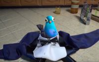Sterling becomes a pigeon, standing amongst his former tuxedo