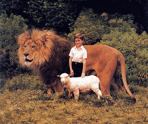 lions, lambs & lions