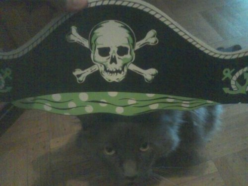 Kipper has demanded a place on the ship. I am  considering what would be ideal for such a whiny cat. I suppose he might  consider adding another eight faux tails…