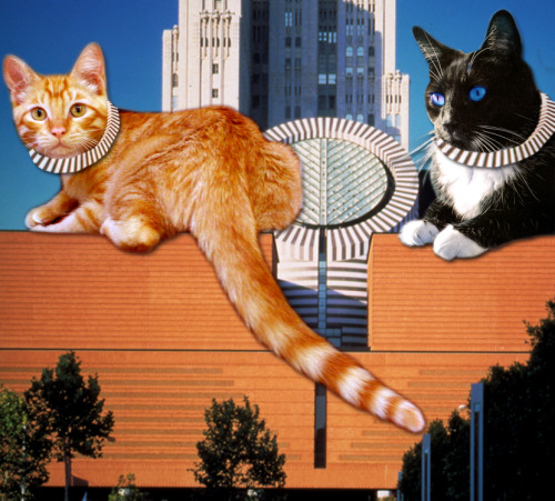 sfmoma: #LOLcats meet architecture = YES, PLEASE. See more here. (We made our own. If you feel like making one, photo reply with it, for the love of all things pure.)