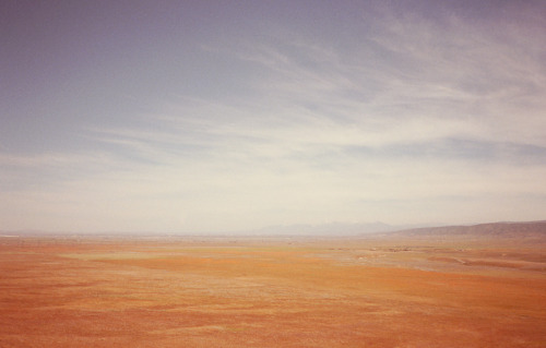 Antelope Valley Poppy Fields Lancaster - 2011 © Derek Wood
