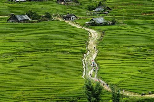 Campos do arroz em Sapa Vietnã