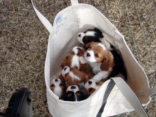 For your convenience, puppies in bag form.(via)