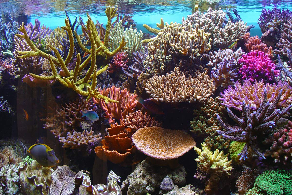 The Importance Of Coral Reefs Scuba Diver Life