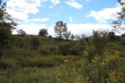 hemlock fields beyond the woods