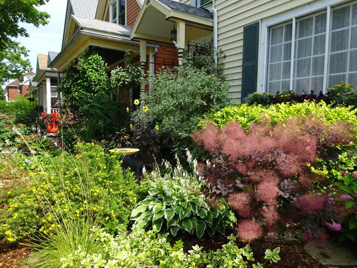 First Smokebush sighting Buffalo July 25th