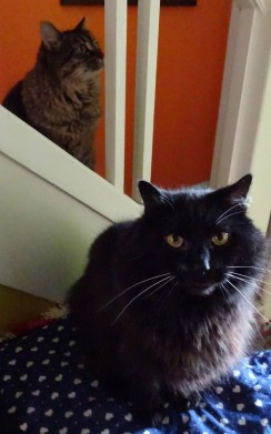 Phyllis and Shadow faces July 2015
