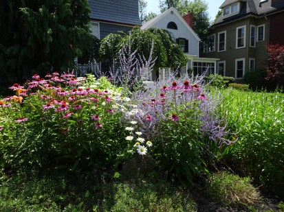 Pink Echinacea, Daisies and Russian Sage