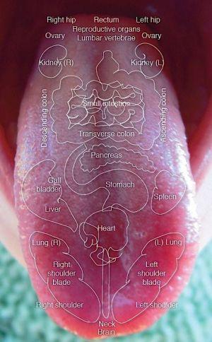 舌の領域  健康