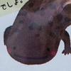 フジトシ食品【オオサンショウウオこんにゃく】高校生発案!キモ可愛い広島新名物