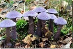 Le candida se comporte comme les champignons