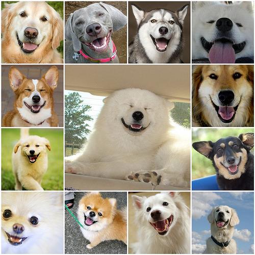 Sunday - Smiling Dog faces