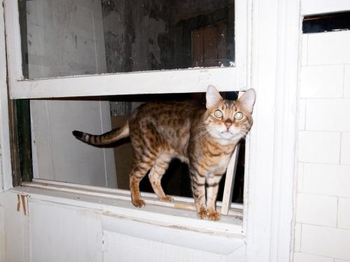 George the Cat.