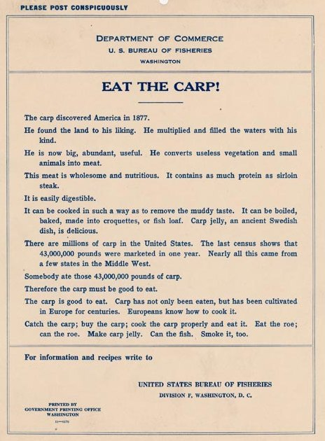 "~ 1911 Bureau of Fisheries poster<br /><br /><br /><br /> via The Foundation for the National Archives""Somebody ate … 43,000,000 pounds of carp. Therefore the carp must be good to eat.""<br /><br /><br /><br /> CAAAAARP!!!"