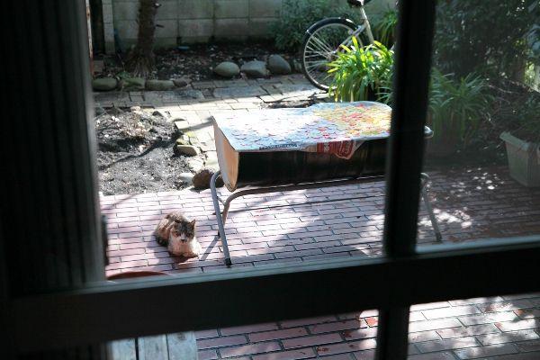 ご自宅の庭猫さん