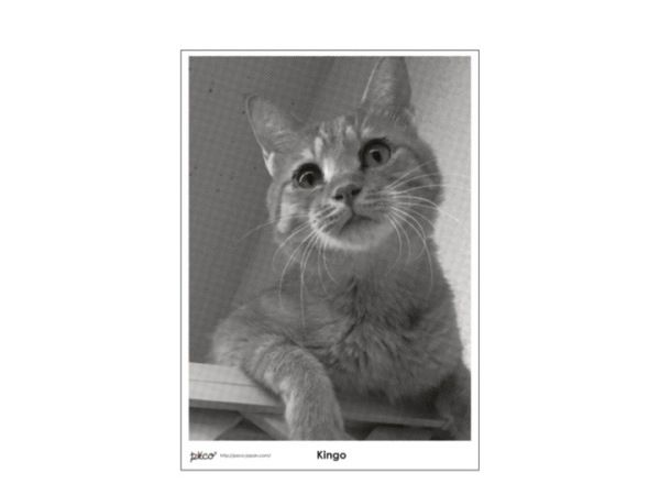 PECO Cat's Poster Project