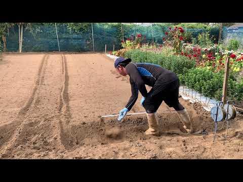 暑い夏はこれ!誰でも簡単に出来る畝の作り方