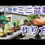 【ちょー簡単】植え替えるだけでOK!ミニ盆栽の作り方 初心者盆栽お手入れ講座 黒松 イワシデ 通天楓 石化檜