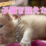 【ブリーダーが教える】子猫を迎えた初日の流れ!トイレ・ごはんのあげ方・ケージって必要?全てお話しします