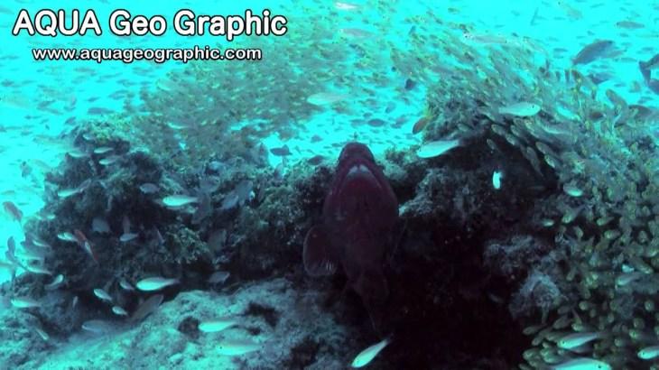 珊瑚と魚達の楽園 Coral Gardens in KERAMA (Shot on 3DA1) 2D Version
