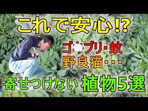 [ガーデニング] 虫よけ・猫よけ植物5選「ハーブコーディネーターがオススメするオーガニックな虫よけ・猫よけ」