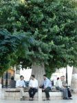 Life goes around at an Aleppo's sahat (square)
