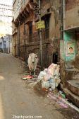 Streets of Jodhpur