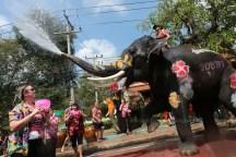 songkran-elephants5