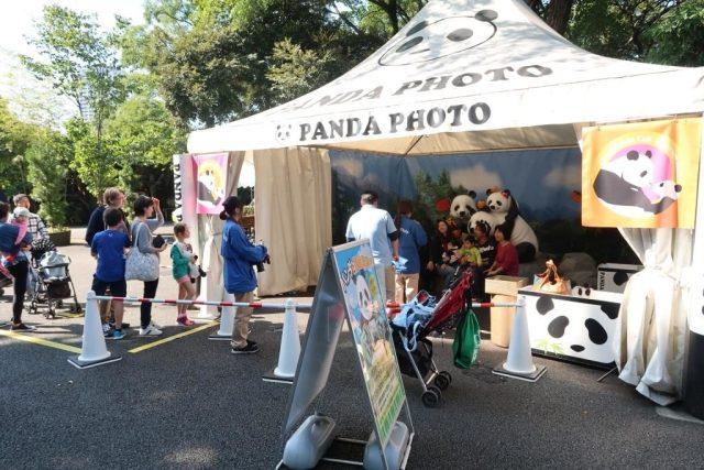 Phototaking for Giant Panda Attraction