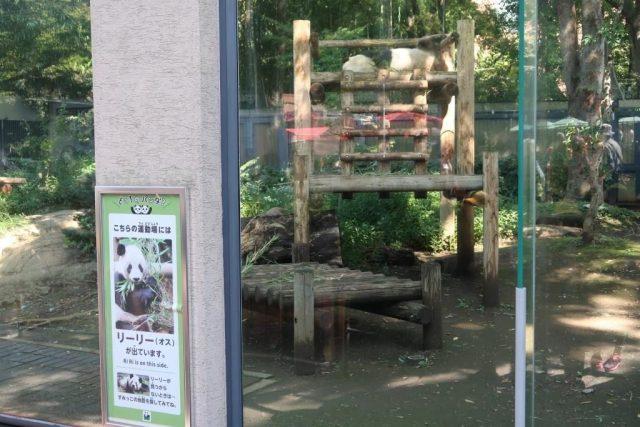 Sleeping Giant Panda Ueno Zoo