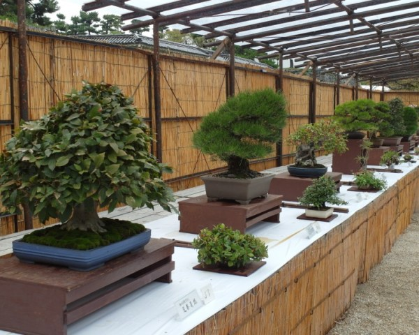 Bonsai Competition at Nagoya Castle