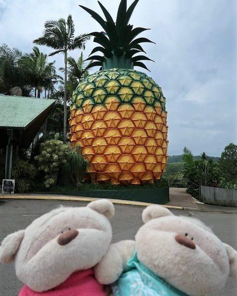 The Big Pineapple Woombye