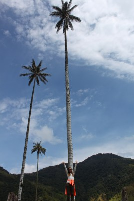 The first of many massive palms