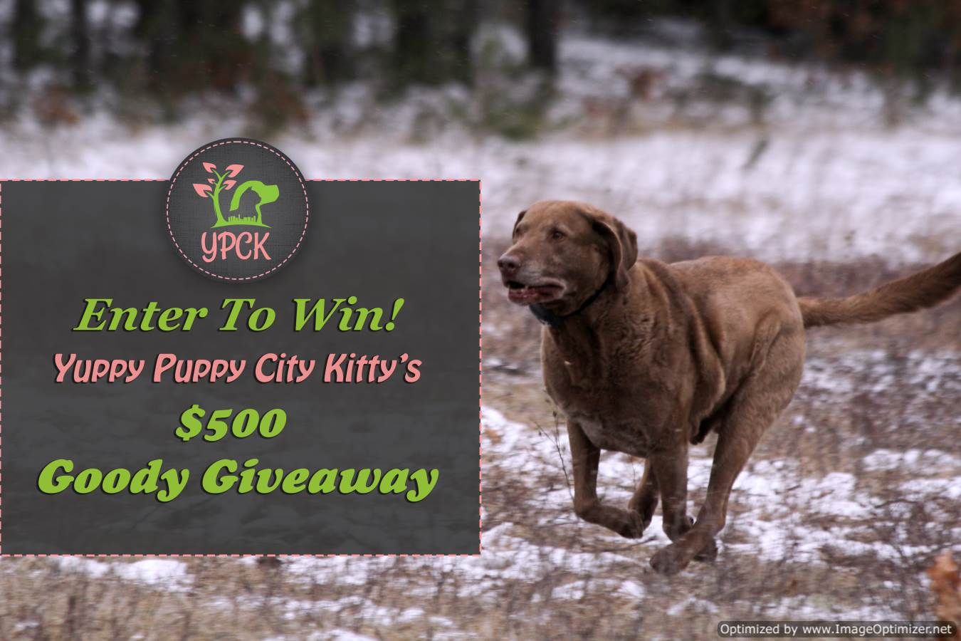 Yuppy Puppy City Kitty 500 Goody Giveaway Sponsored