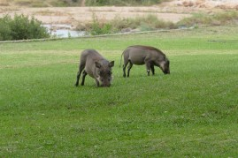 African lawn mowers