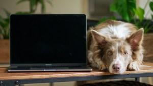 dog laying next to computer