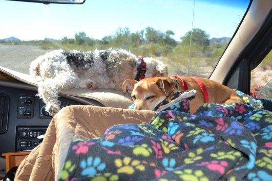 Dash Dogs Basking in the Sun