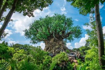 The tree of life, pre-refurb.