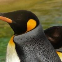 Visit Edinburgh Zoo
