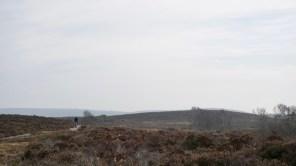 Hartland Moors