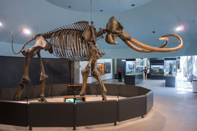 Wooly Mammoth fossil at the La Brea Tar Pits