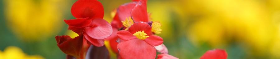 Flower garden banner photo