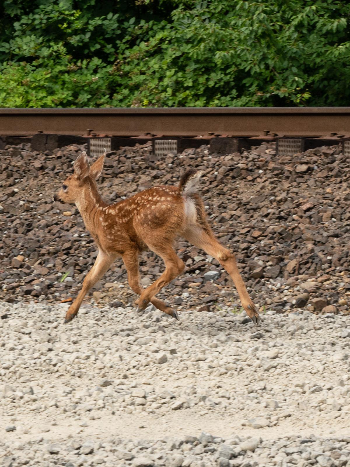 20180707-ridgefield-trains-new-24-105-lens-133_