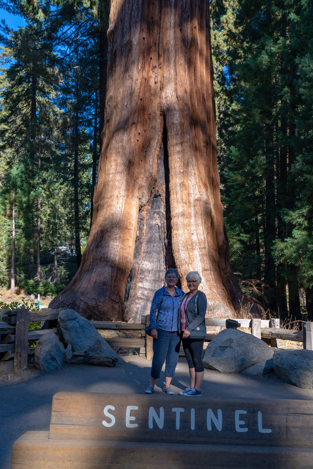 Sentinel Tre; Big Trees Trail, Sequoia National Park