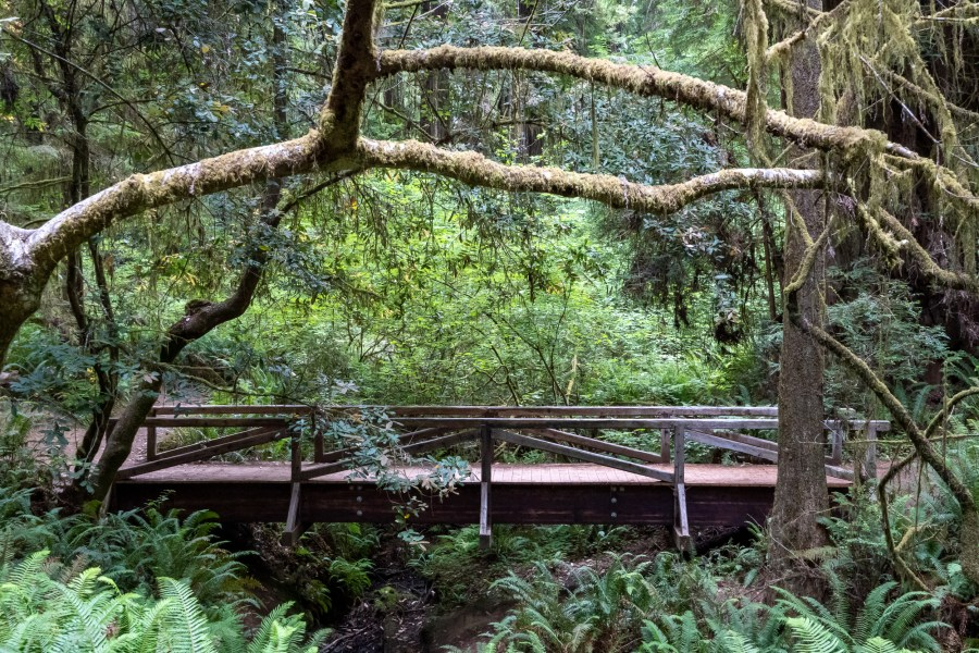 California Trip Day 2: Northern Redwoods