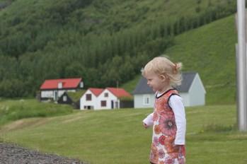 Vilja på södra Island