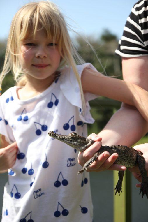 Att få klappa en babyalligator