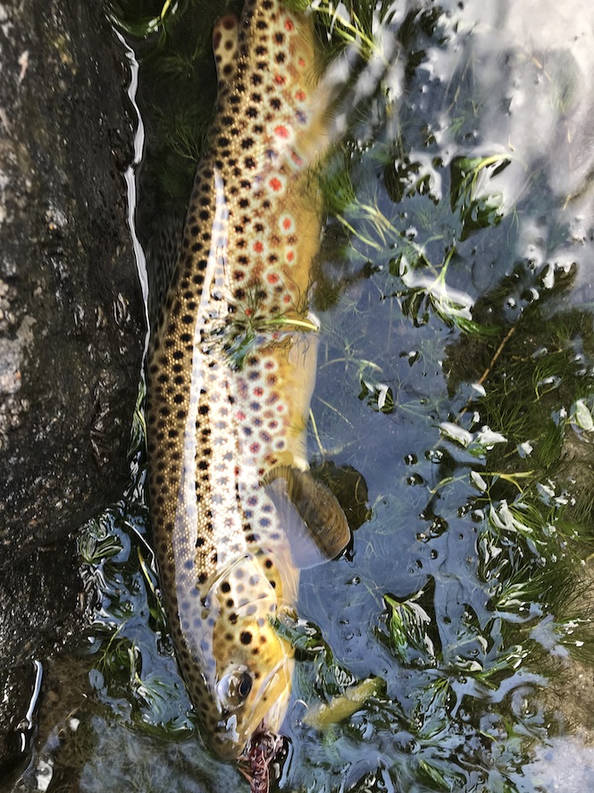 favorite fly fishing streamers