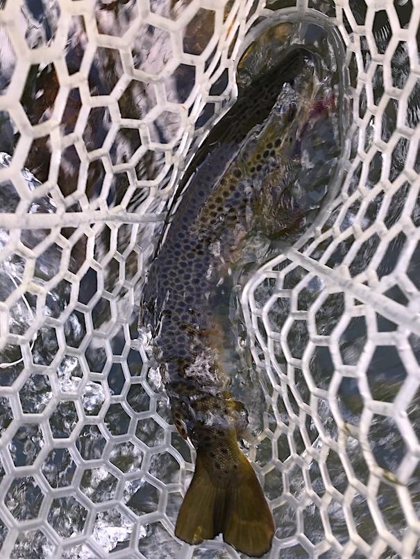South Bend Mark III Trout Net
